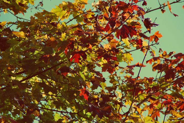 Un goût d'automne... dans Illustrations cartes postales lk